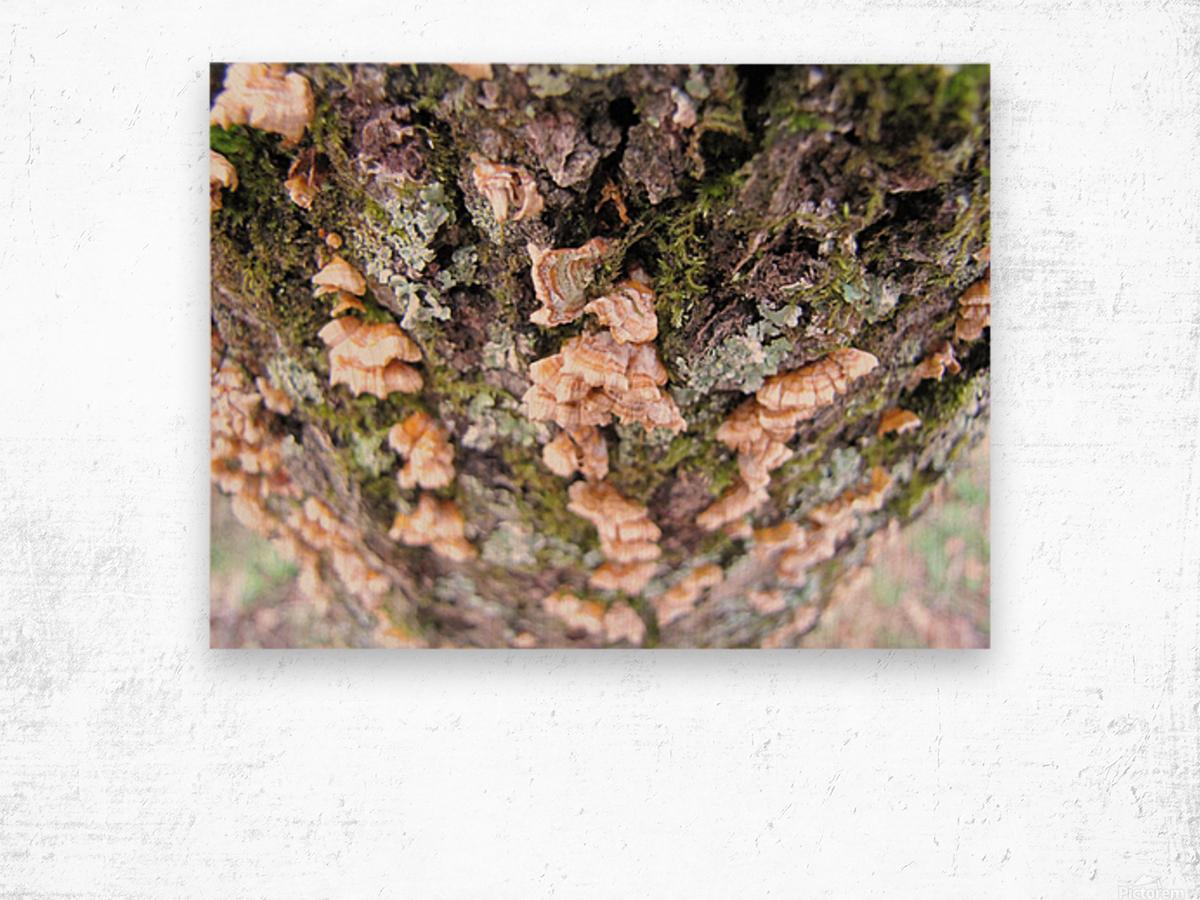 Nature Impression sur bois