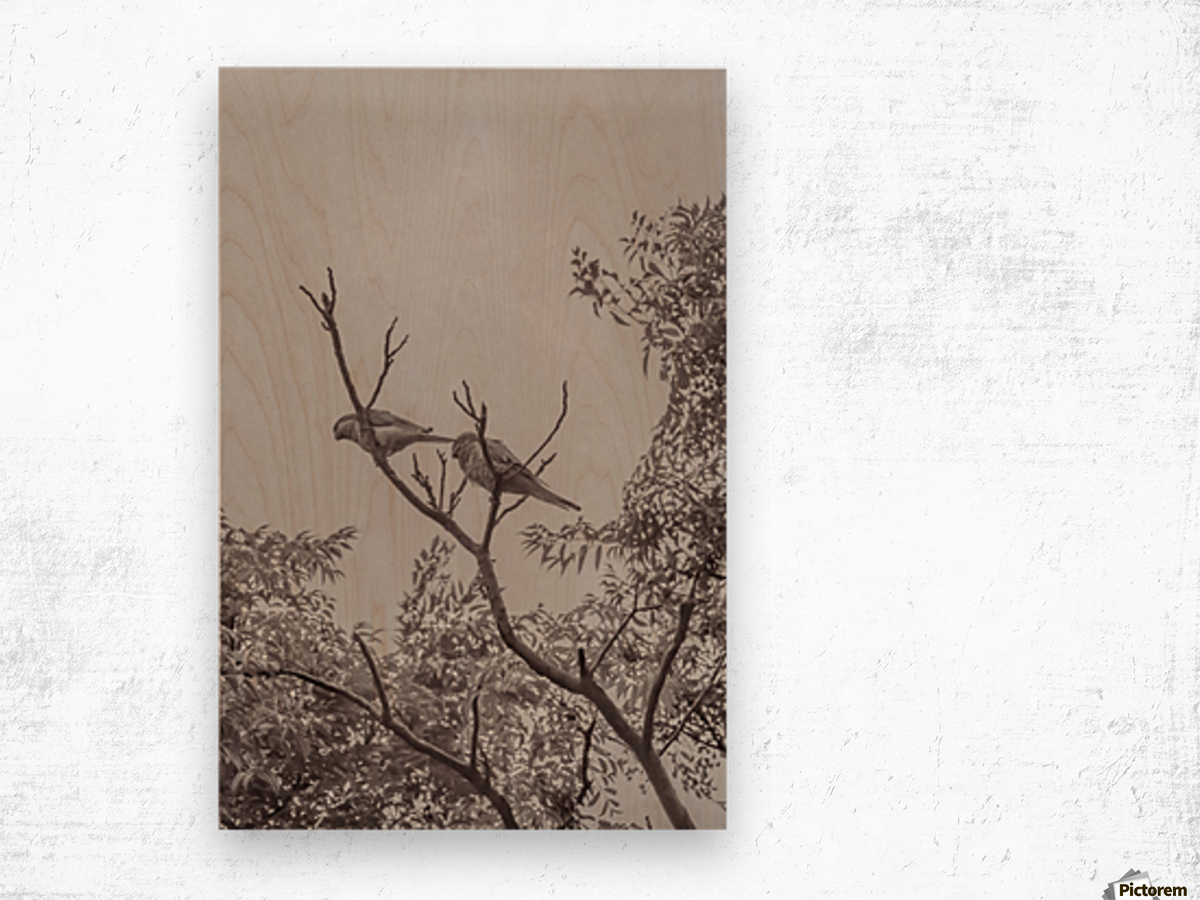 Couple of Parrots in the Top of a Tree Wood print