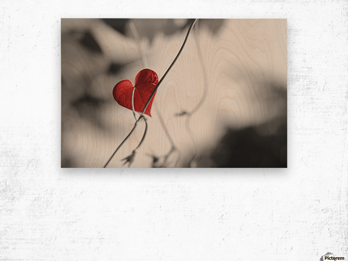 Red heart shaped leaf Wood print