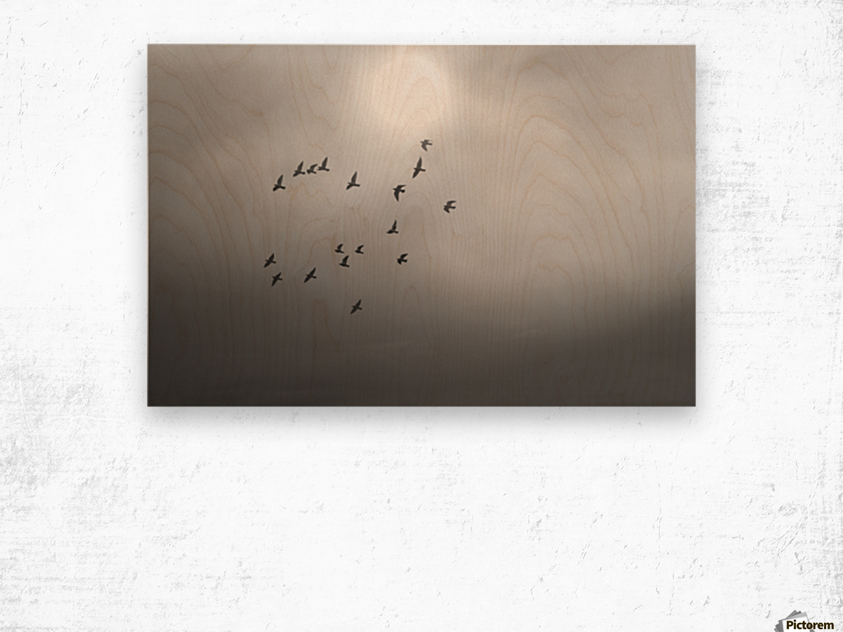 Doves daily flight routine Wood print