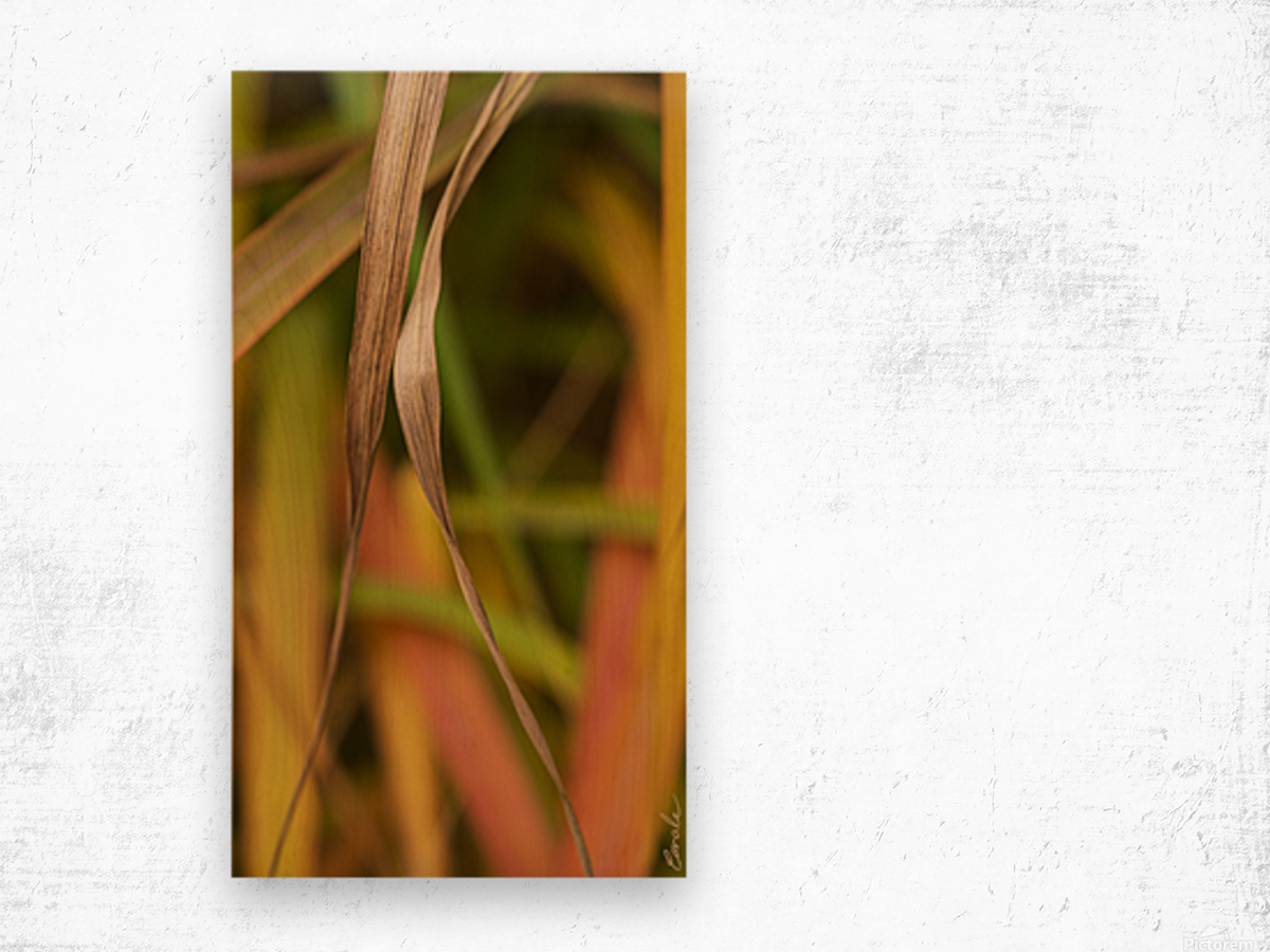 Flamboyantes Graminees no. 5 - Flamboyant Grasses no. 5 Impression sur bois