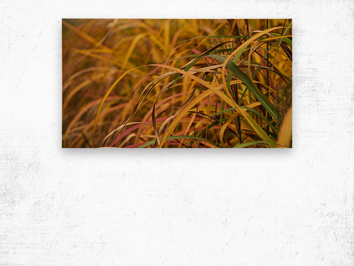 FLAMBOYANTES GRAMINEES NO. 1 - FLAMBOYANT GRASSES NO. 1 Impression sur bois