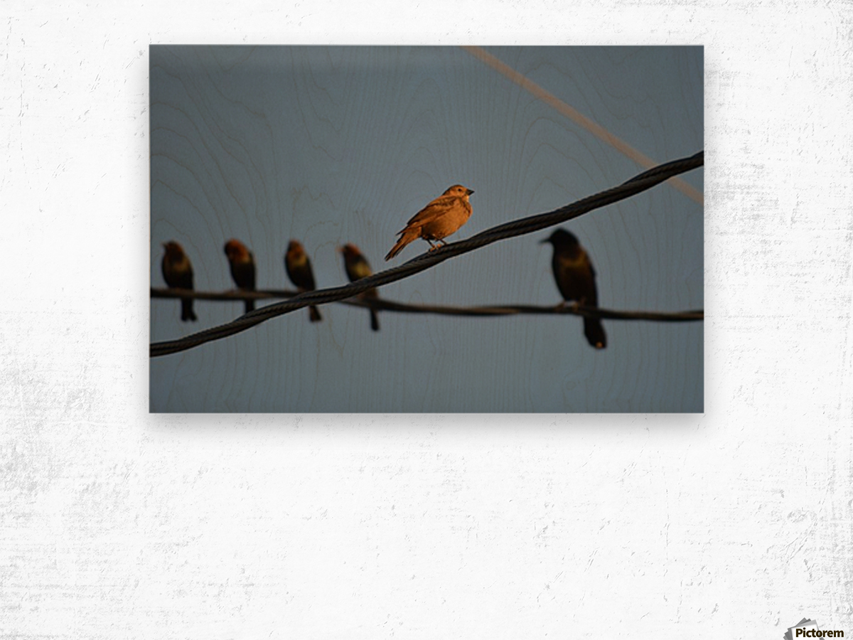 Birds on the Wires Wood print