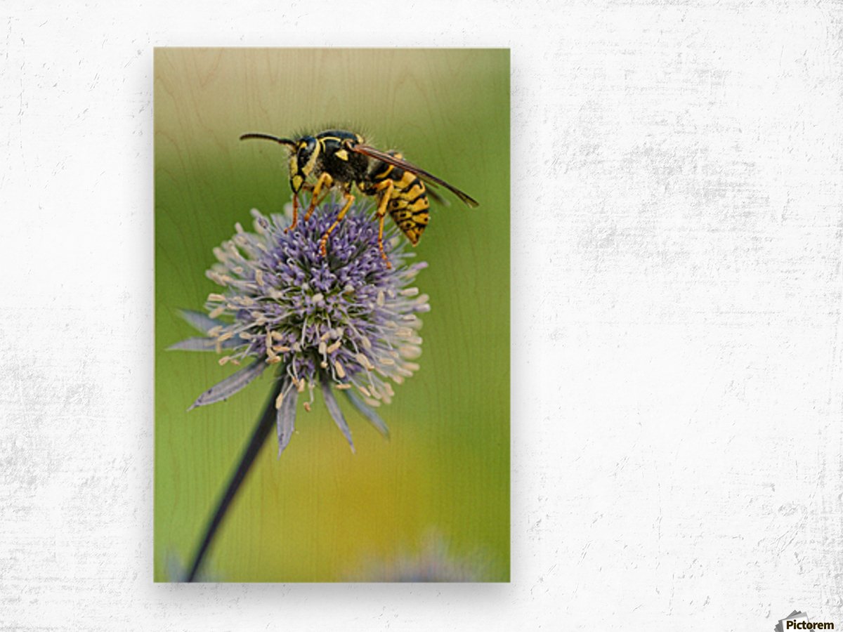 Country Wasp Wood print