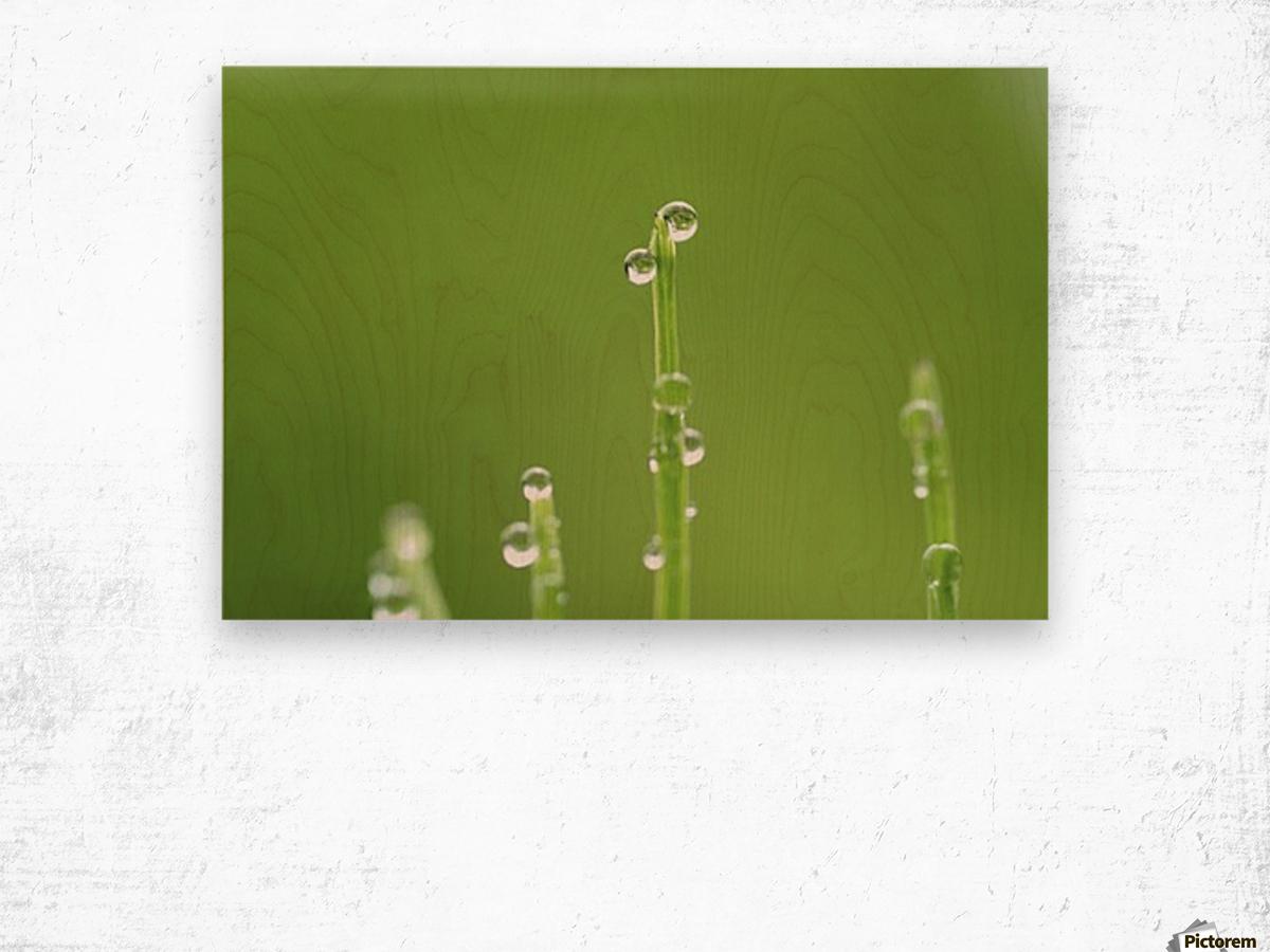 landscape_2_0986 Wood print