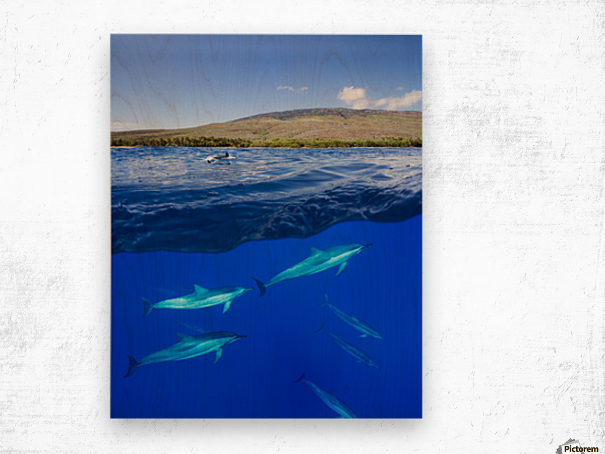 A split view of spinner dolphin (Stenella longirostris) below water and the island of Lanai above; Hawaii, United States of America Wood print
