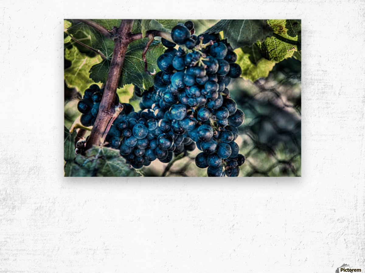 Bunches of Grapes Wood print