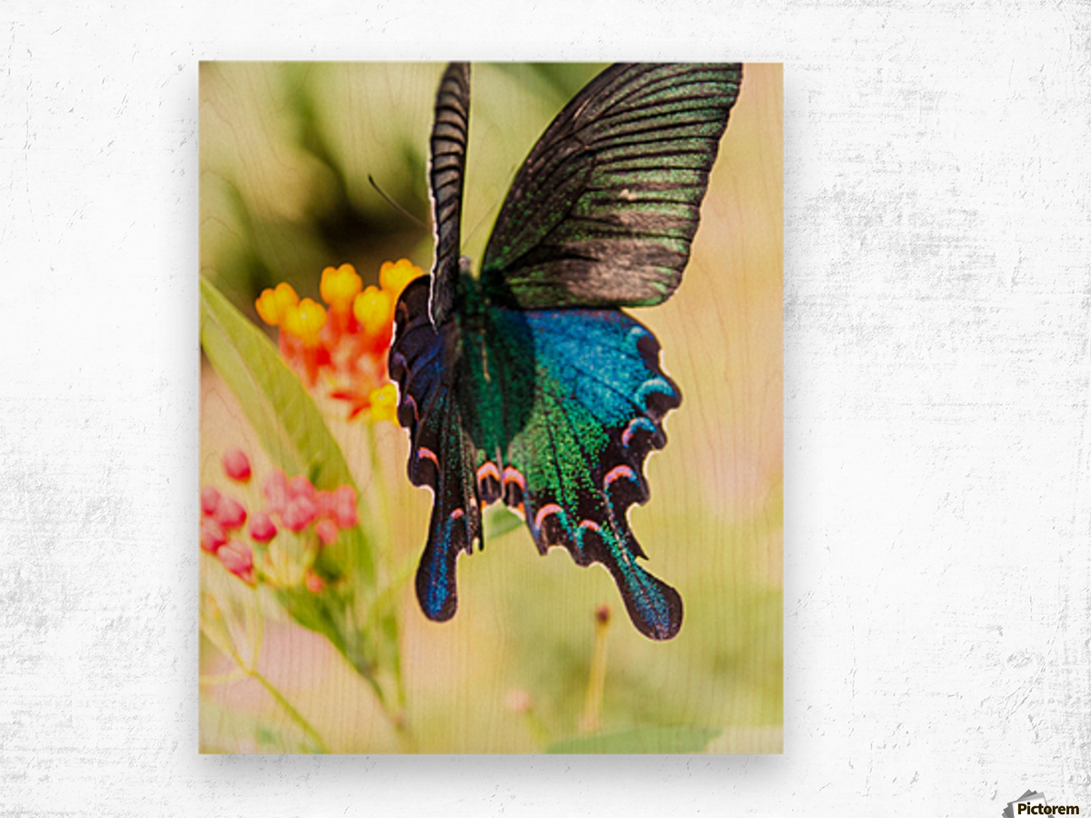 Butterfly not in the sky Wood print