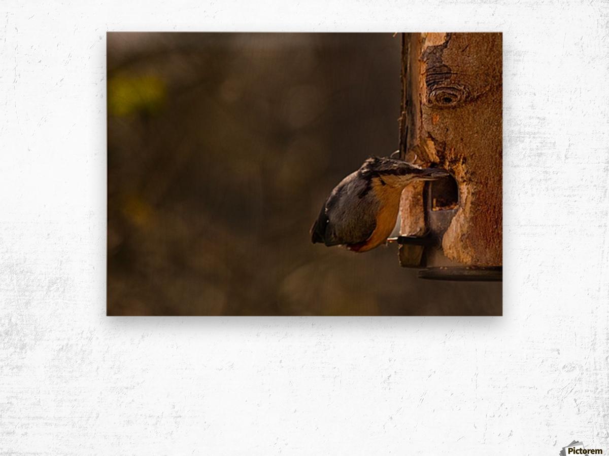 Nuthatch feeding Wood print
