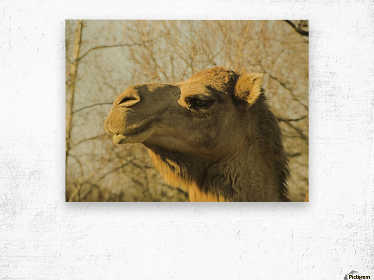Aribian Camel Wood print