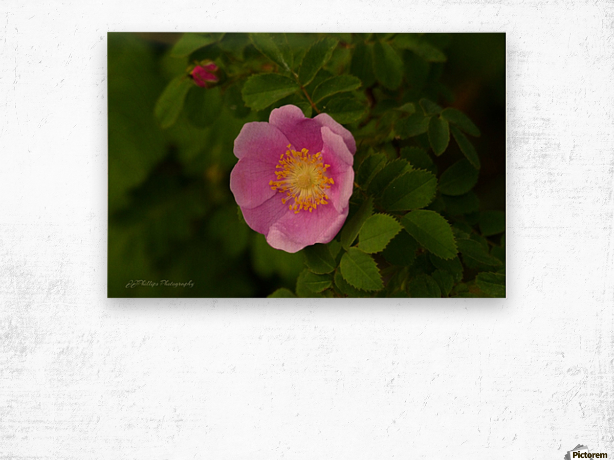 Nootka Rose Wood print