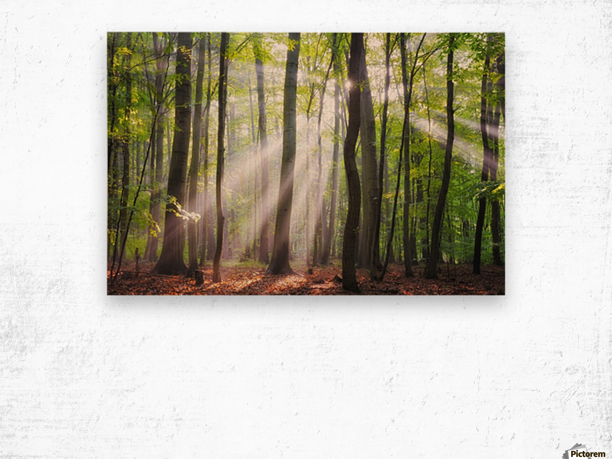 When the sun shine on your way Wood print