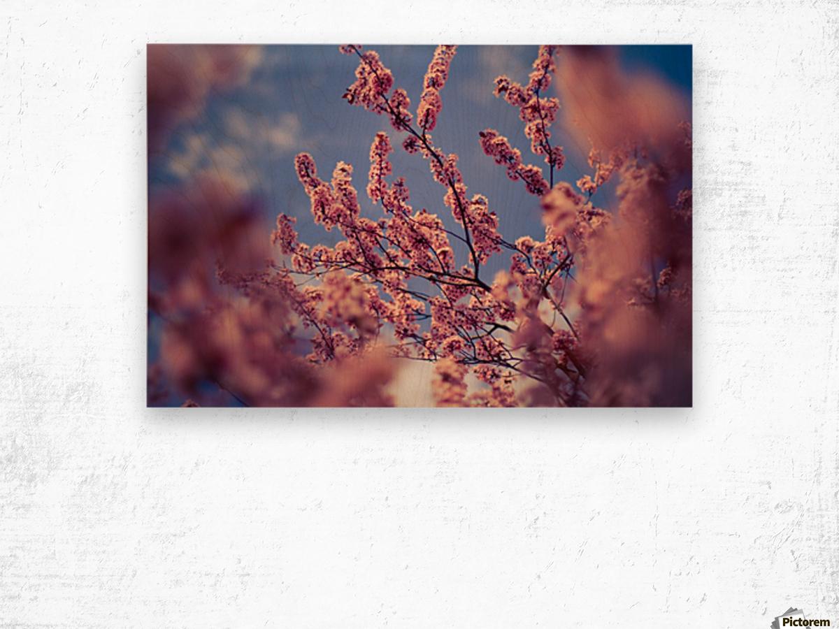 Spring cherry flowers Wood print