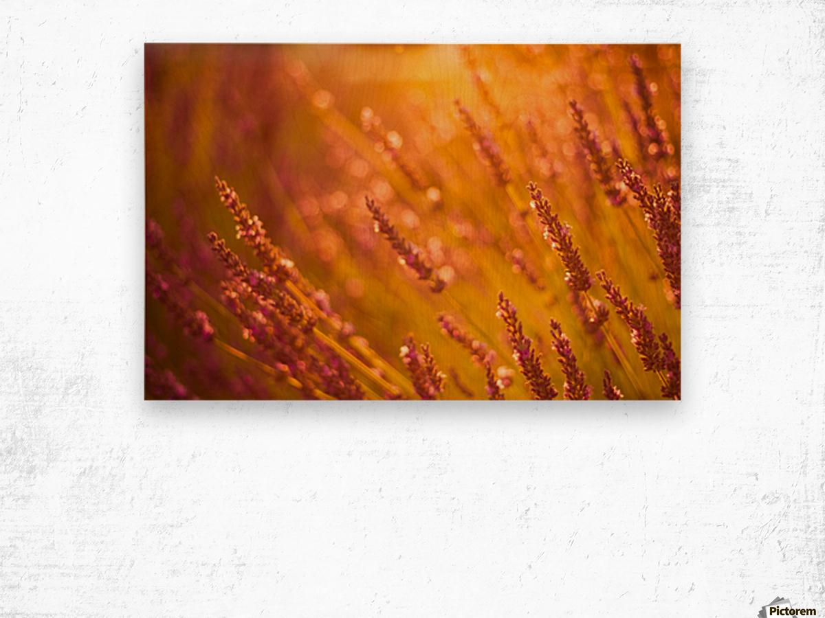 Sunset lavender flowers Wood print