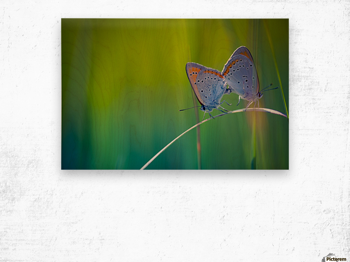 Butterfly summer background Wood print