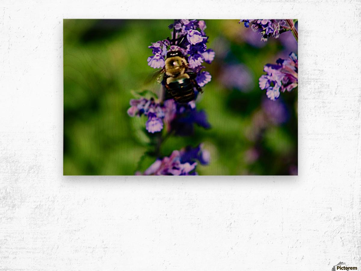 Bumbling Bee 2 Wood print