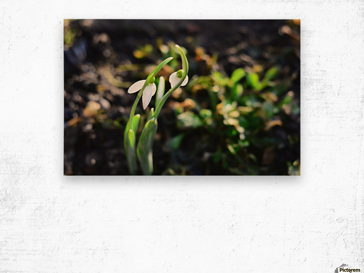 Snowdrop couple Wood print