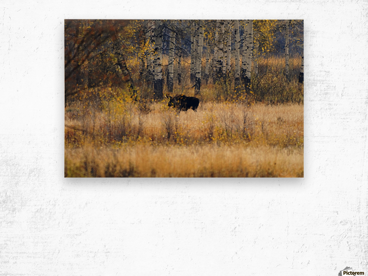 Early light in Gros Ventre Wood print