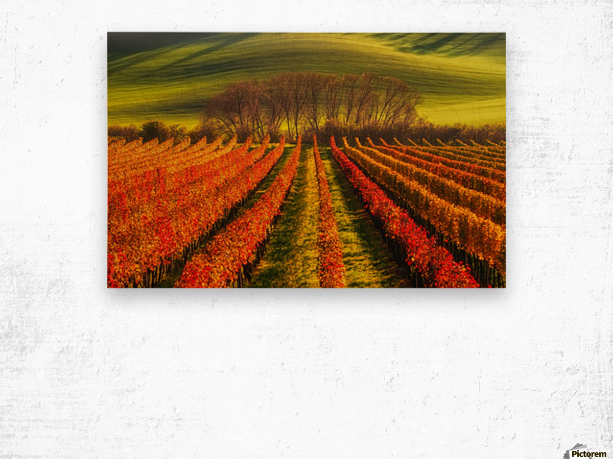 vine-growing Wood print