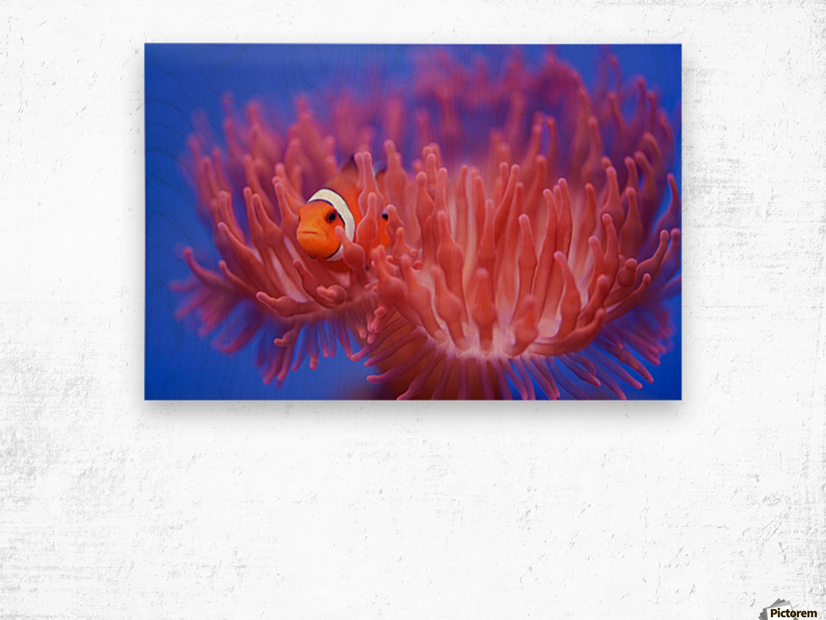 Finding Nemo Wood print