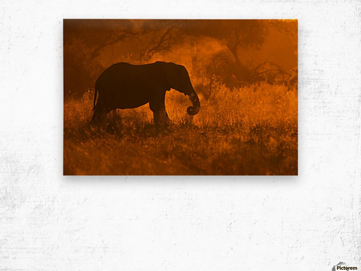 Golden Elephant in Savute Wood print