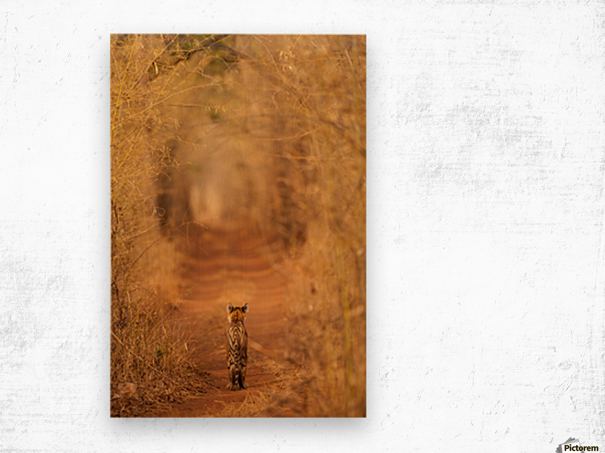The Tiger in  the Tunnel Wood print