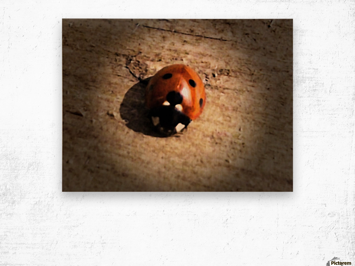 Lady Bird Bug Wood print