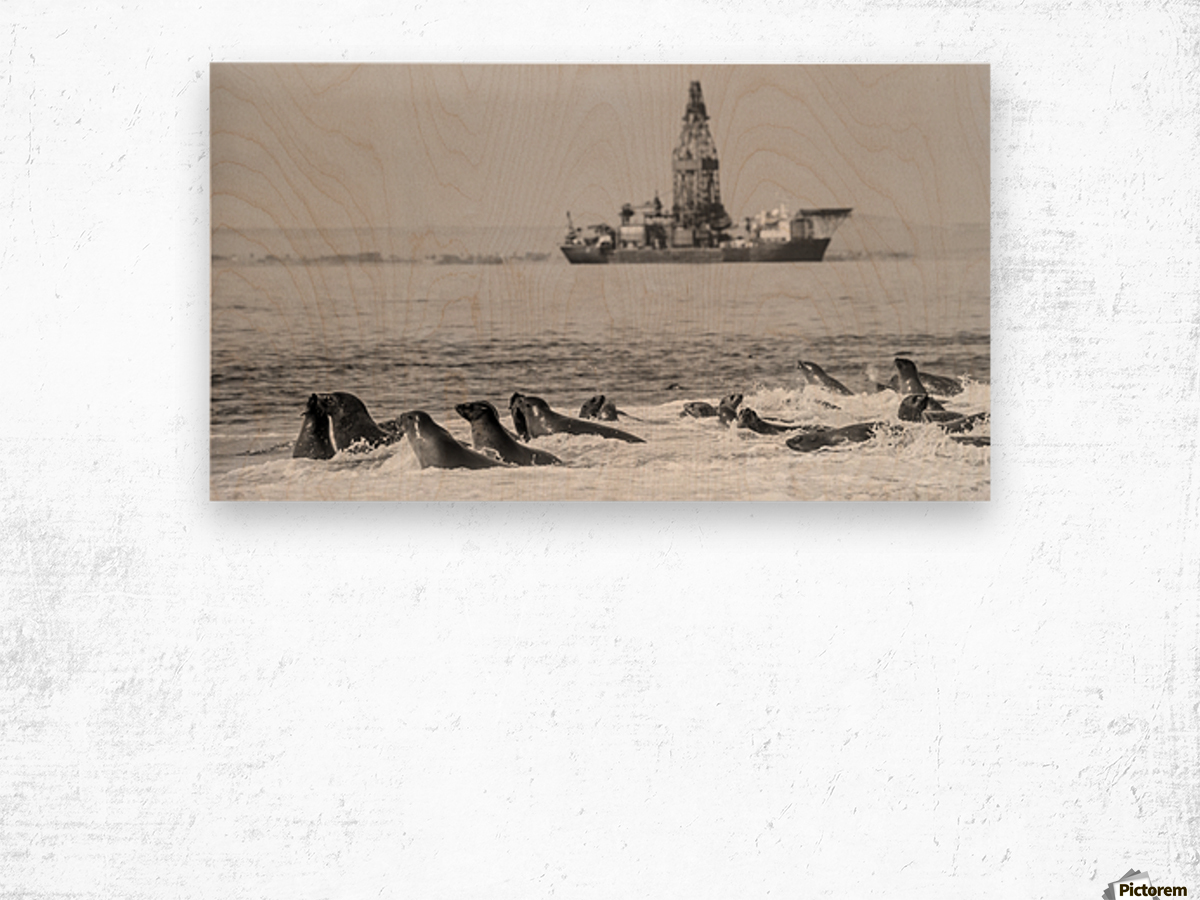 Seals by Oil Drill  Wood print