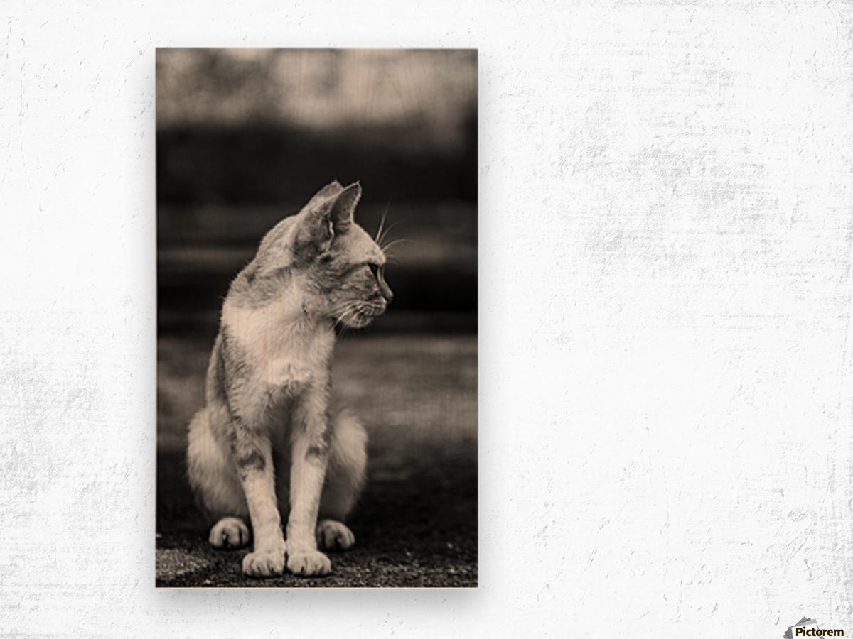 IMG_1324 Wood print