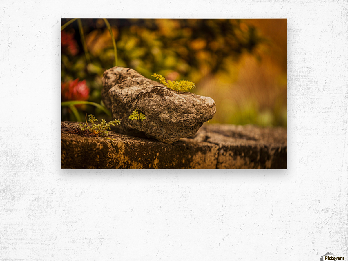 IMG_1288 Wood print