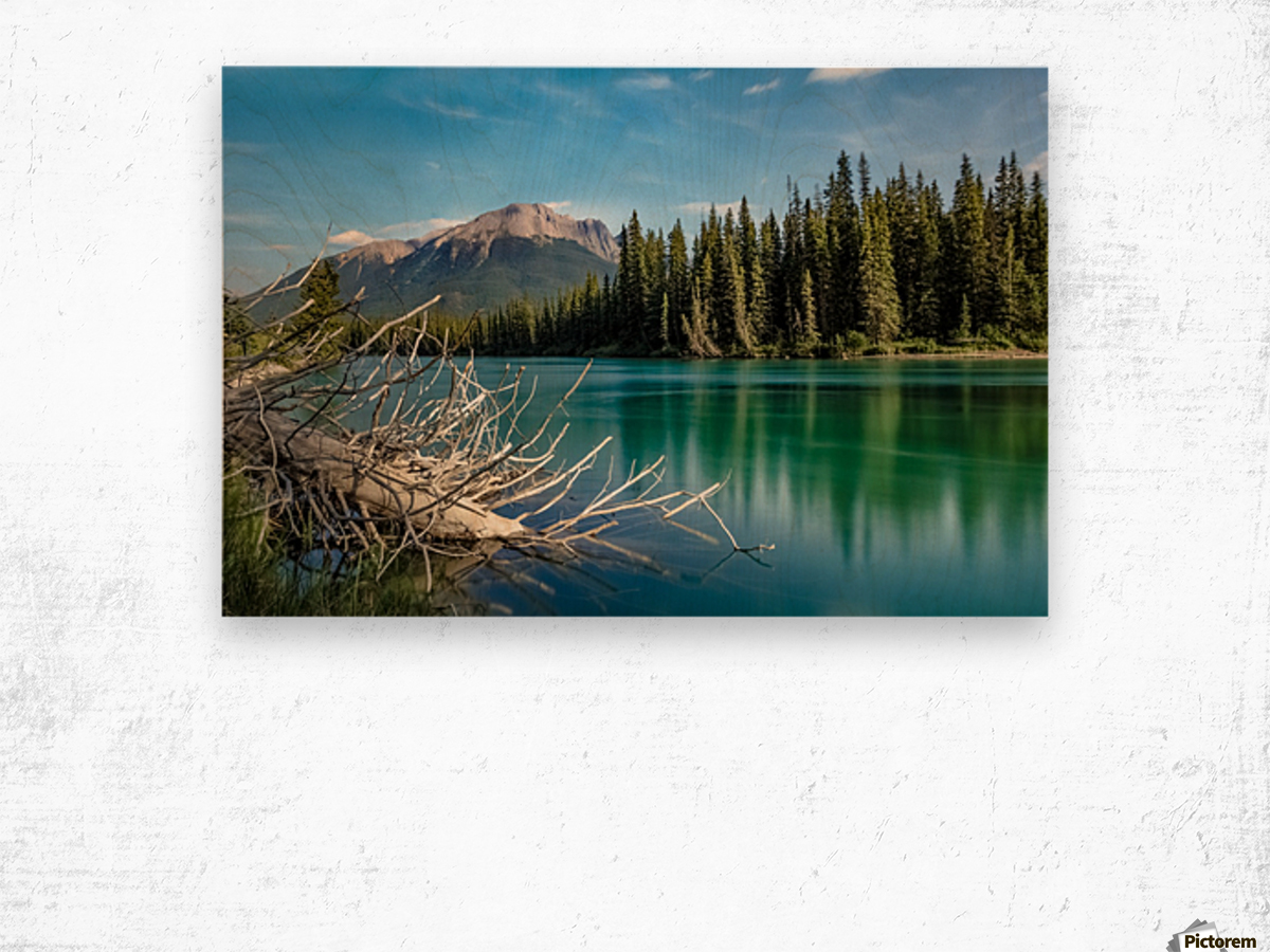 Summer Bow river Wood print