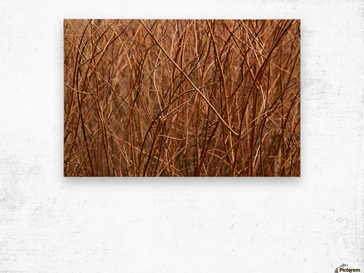 Abstract Background Branch Brown Color Flora Wood print