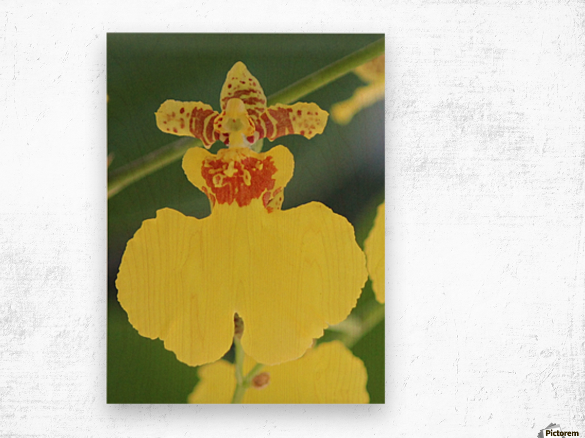 orchid3 Wood print