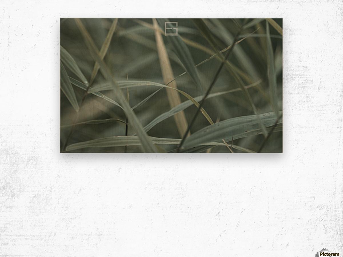 ; Wood print