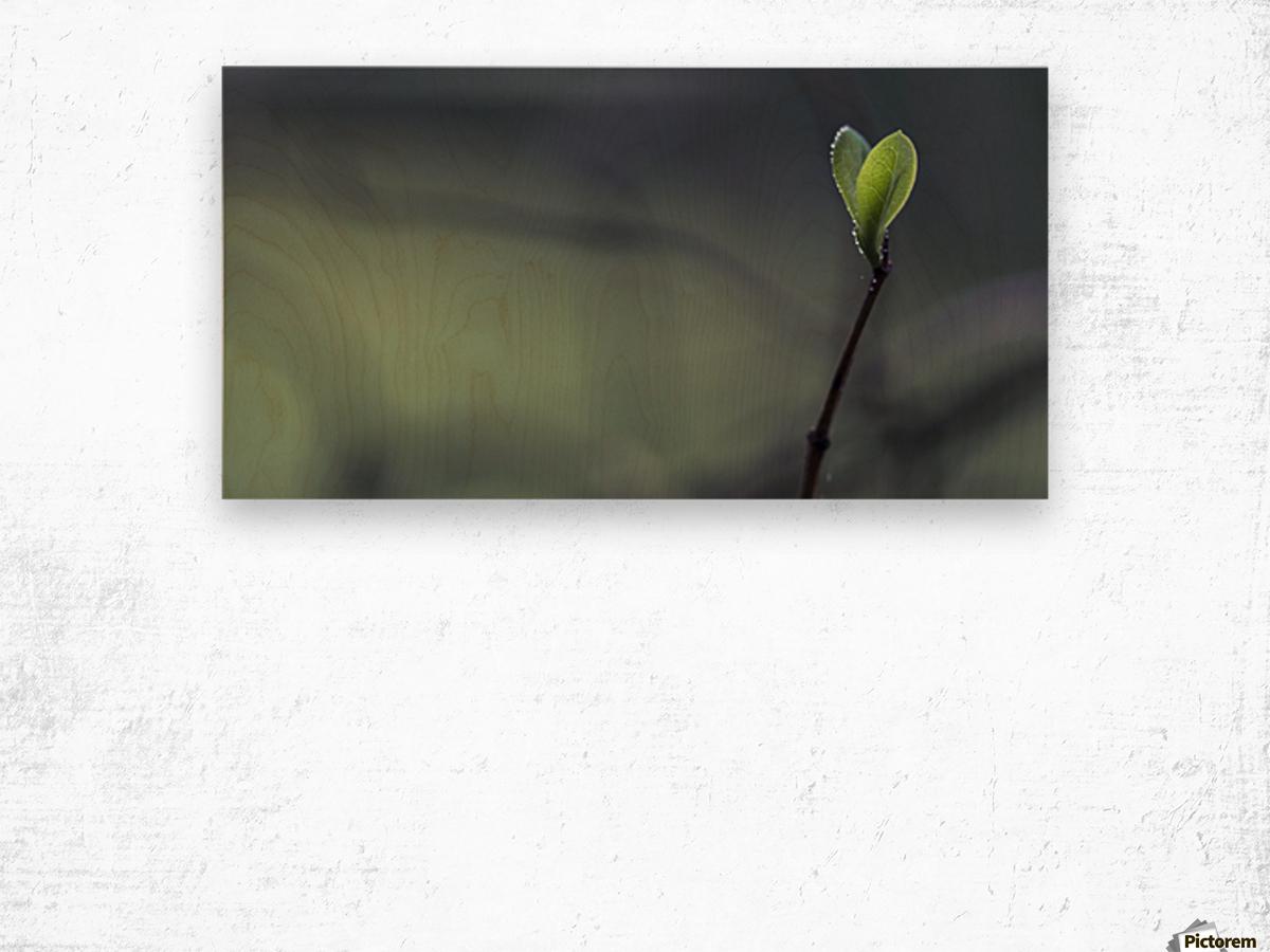 . Wood print