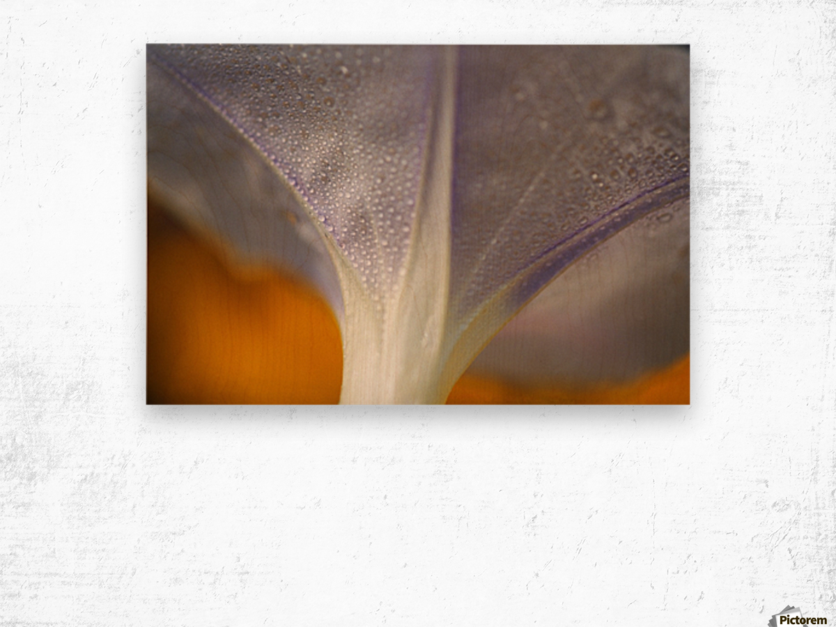Underside Of A Flower Blossom With Dew Wood print