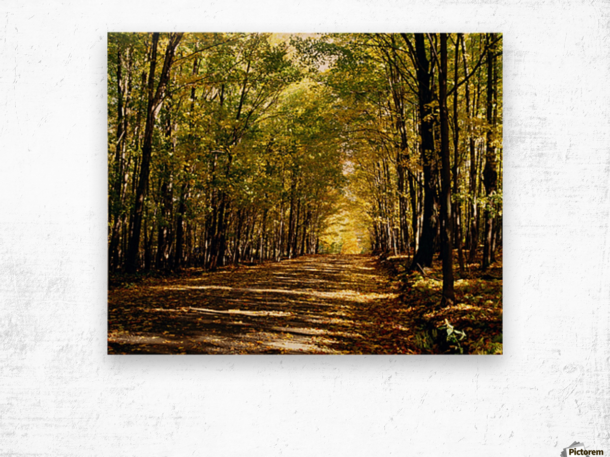 Tree Lined Road In Autumn Wood print