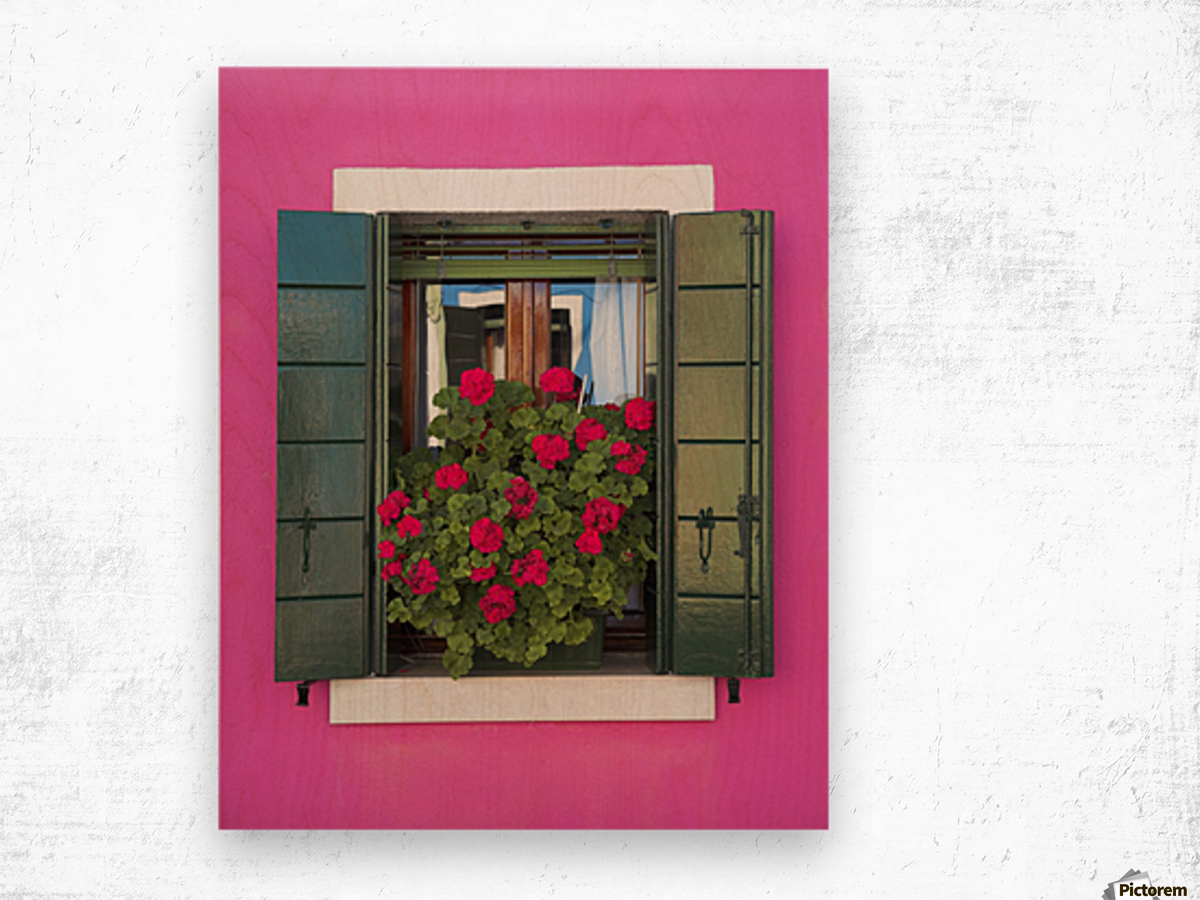 Pink Wall And Green Shutters, Burano, Italy Wood print
