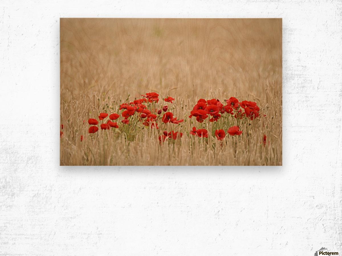 Poppies Growing Wild Wood print