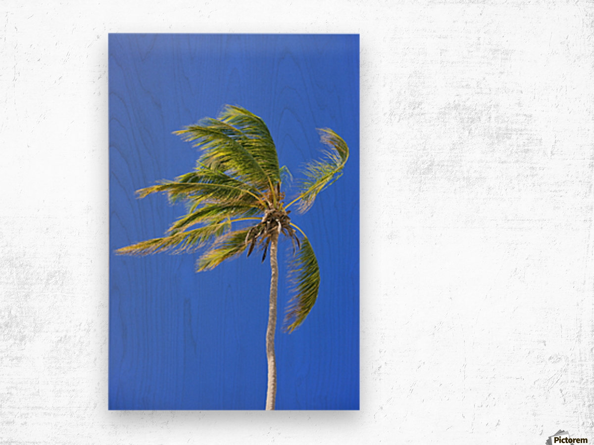 Palm Tree Against Clear Blue Sky Wood print