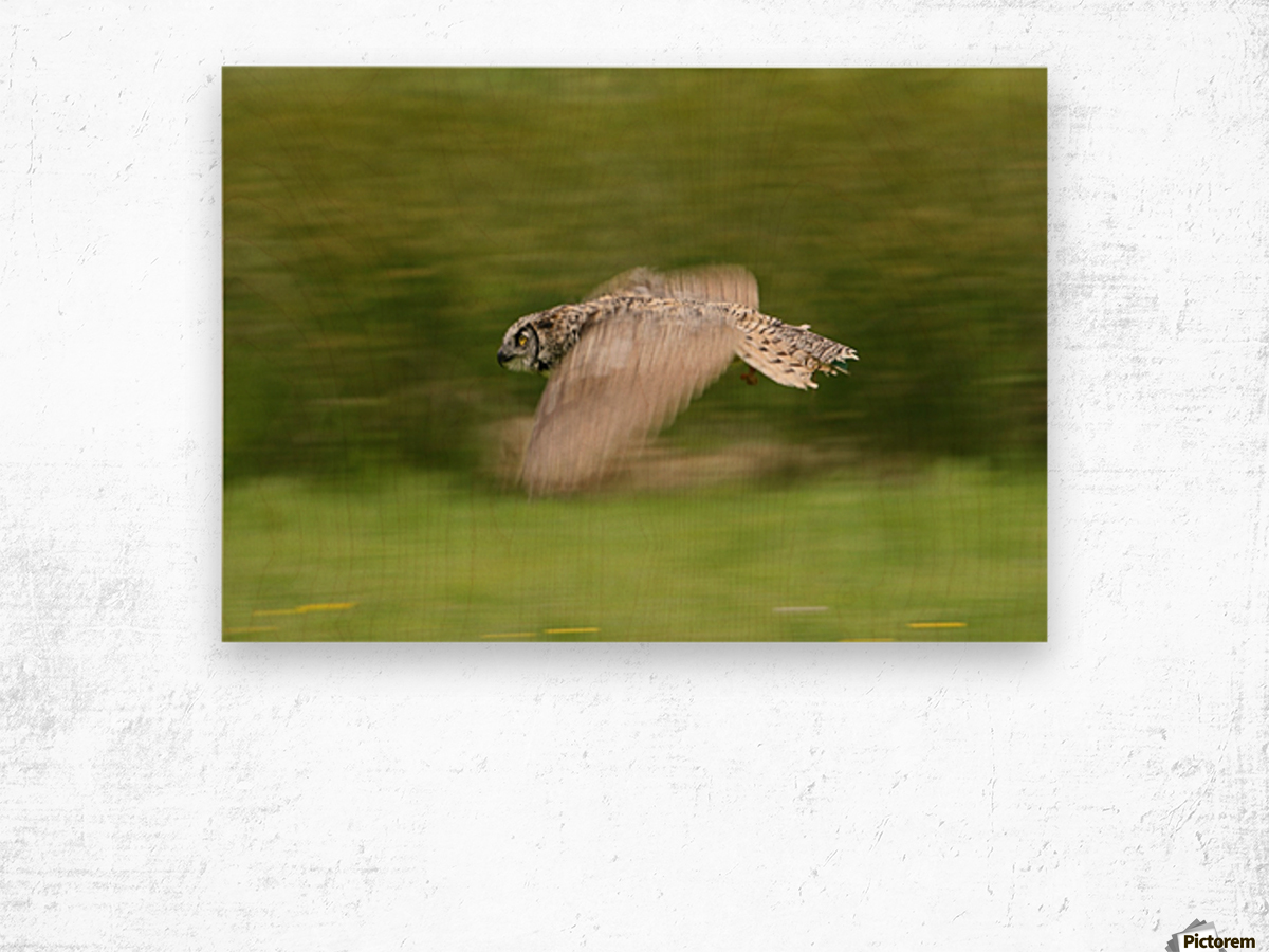 Great Horned Owl (Bubo Virginianus) Wood print