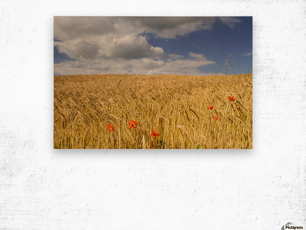 Wild Poppies In Wheat Field, North Yorkshire, England Wood print