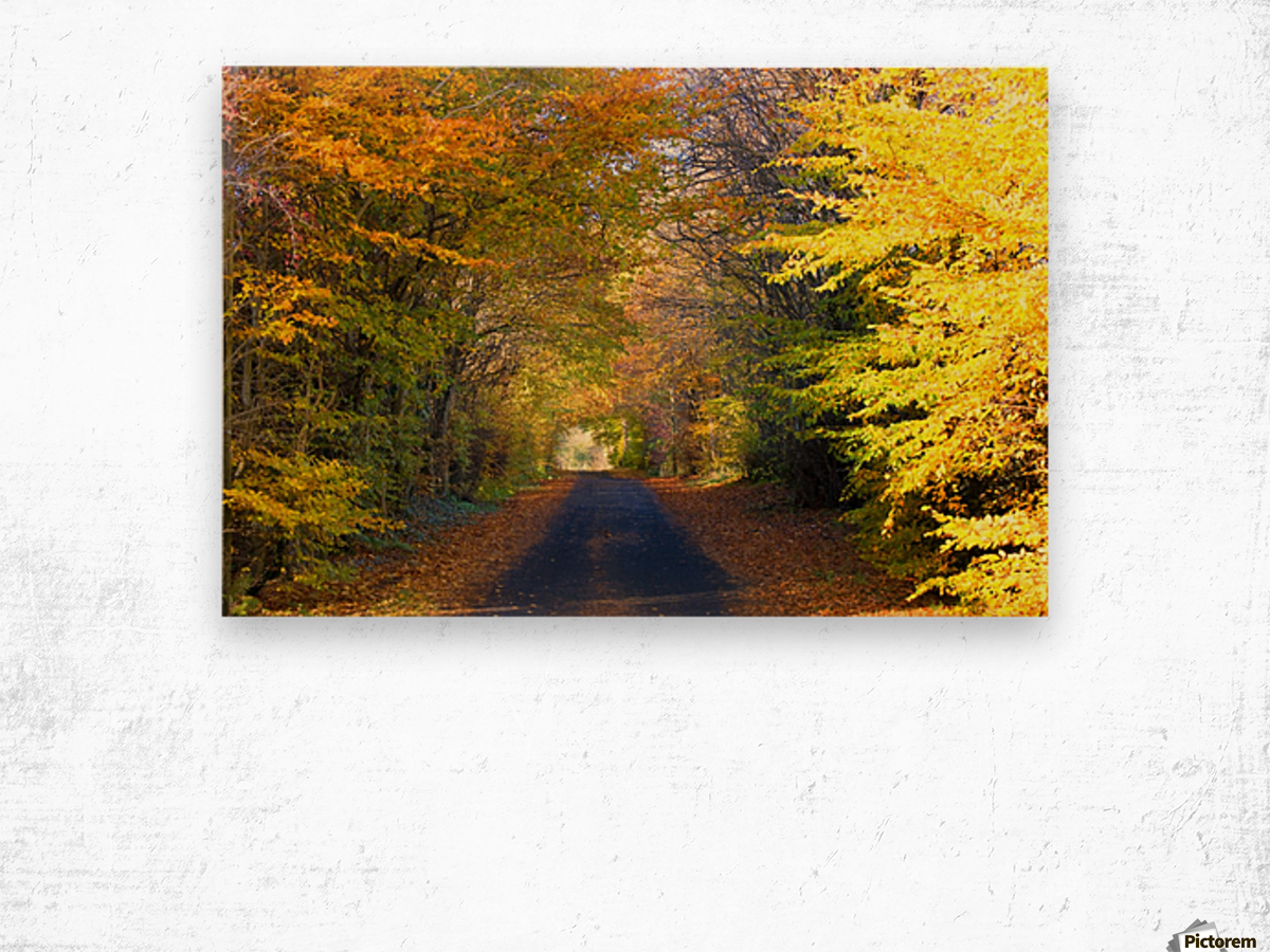 Rural Road, Argyll And Bute, Scotland Wood print
