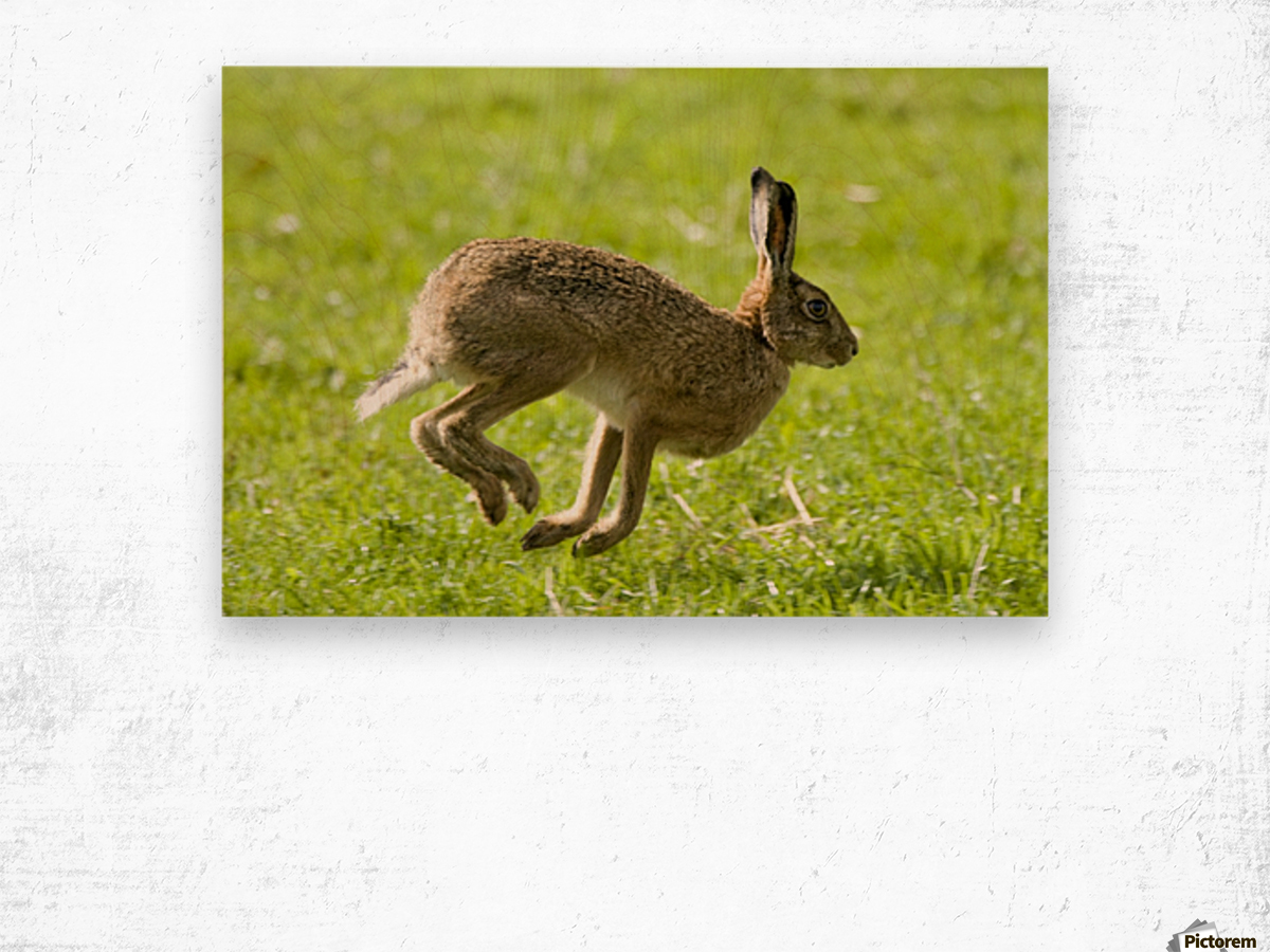 Hare Hopping In The Grass Wood print