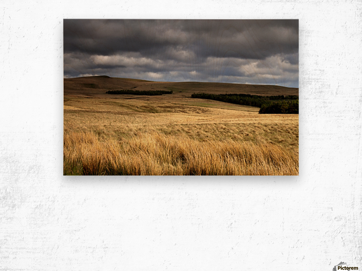 Field Of Wheat With Dark Clouds Overhead, Northumberland, England Wood print