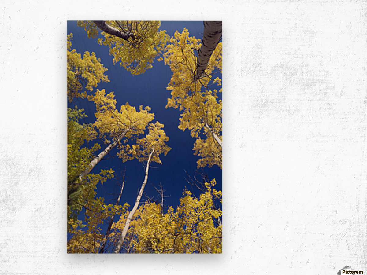 Forest During Autumn, Kananaskis, Alberta, Canada Wood print