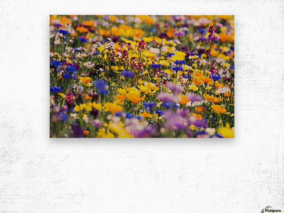 Wildflowers, Mount Hood, Oregon, Usa Wood print
