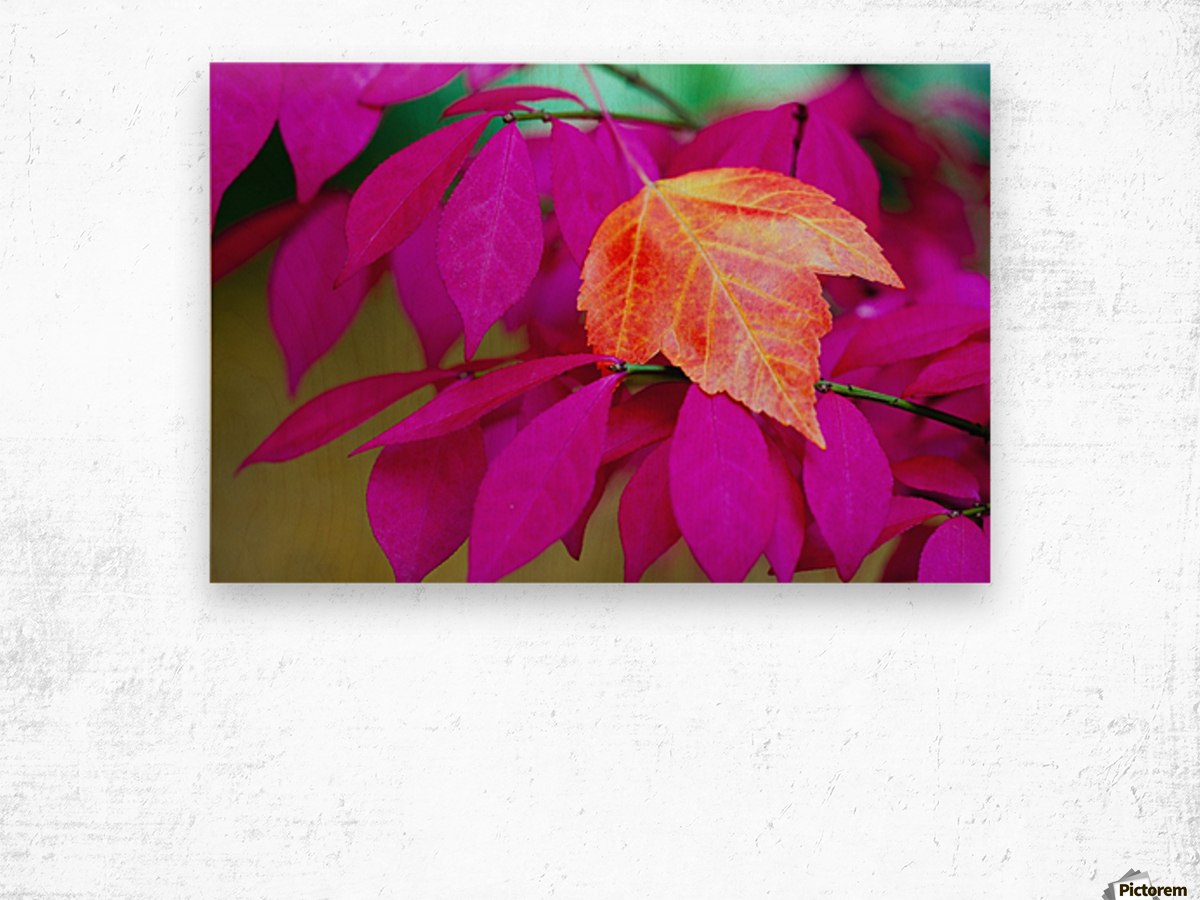 Oregon, United States Of America; A Red Leaf Laying On Bright Pink Leaves Wood print