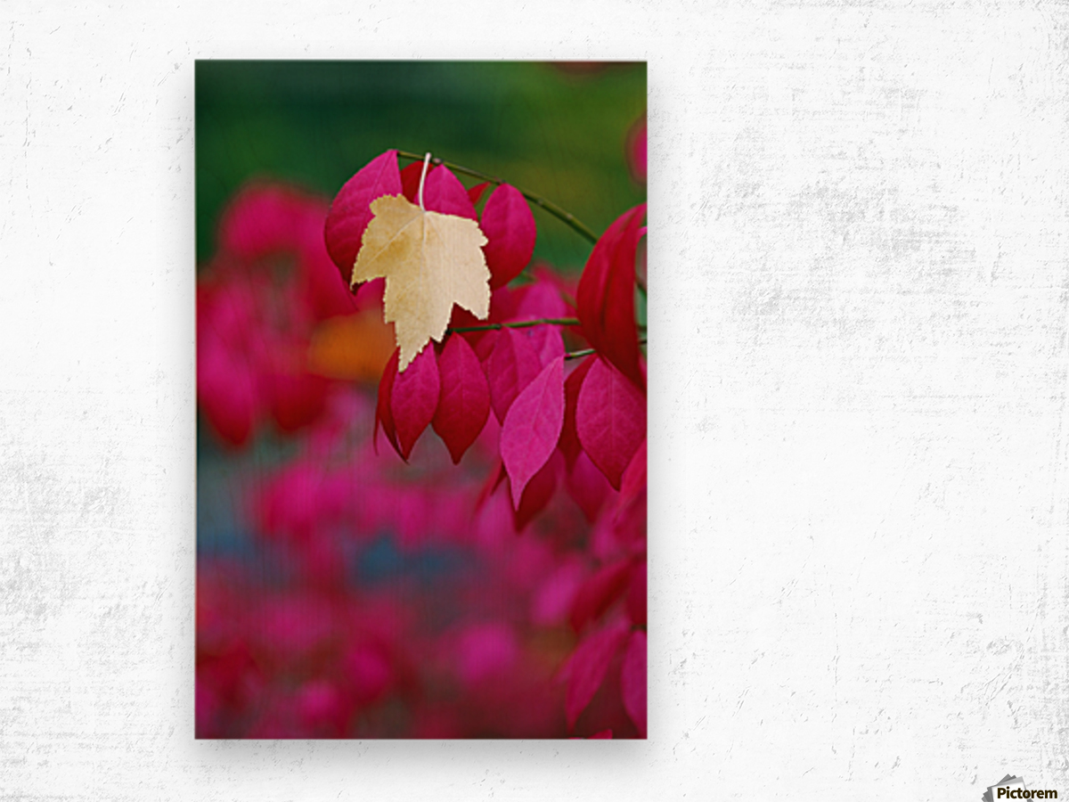 Oregon, United States Of America; A Yellow Leaf Fallen On Pink Leaves Wood print