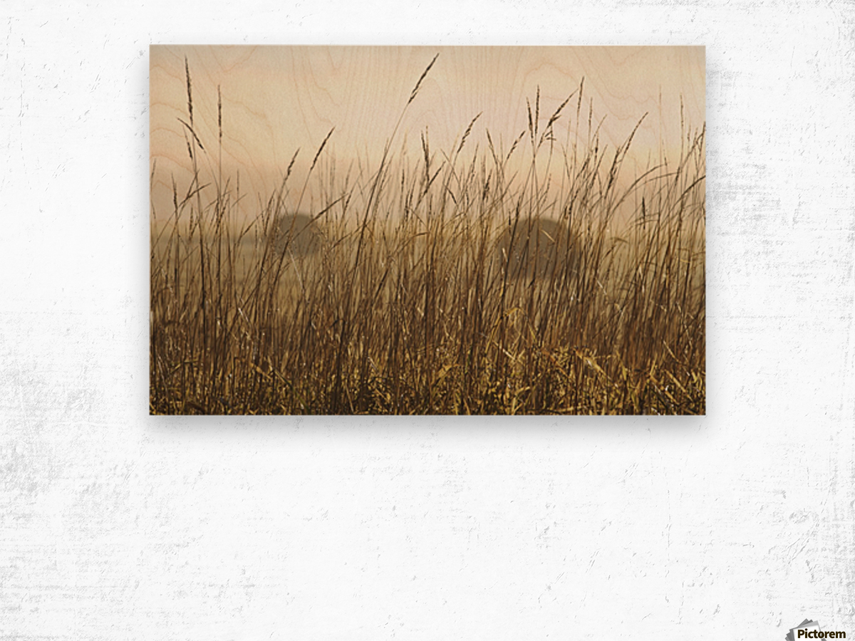 Bales Of Hay In A Field In The Fog; Thunder Bay, Ontario, Canada Wood print